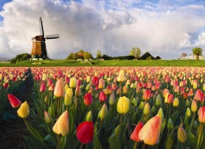 The Beauty of Holland